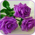 Beautiful flowers and roses pictures Gif APK
