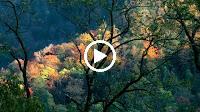 Đám Cưới Đầu Xuân (Tone Nữ) – Nhạc Sống Organ