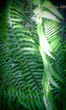 Photo: Grateful for the ferns in the woods and at my house.