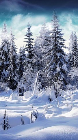 android Winter forest.Nature wallpaper Screenshot 1
