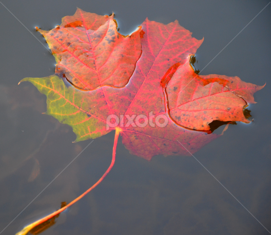 by Rita Bugiene - Nature Up Close Leaves & Grasses ( fall leaves on ground, fall leaves, nature, colorful, color, fall,  )