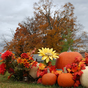 It's Fall by Becky Patlan-Garcia - Public Holidays Thanksgiving ( pumpkin patch, tree, pumpkin, cemetery, fall, pumpkin close up, pwcpumpkins )