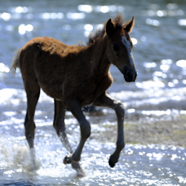 The Youngest by Kate Purdy - Animals Horses ( foal, arizona, wild horses, baby, baby horse, animals, desert, water, lake, wildlife )