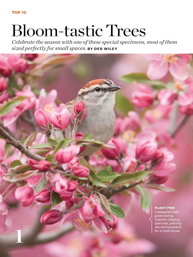Birds and Blooms- screenshot