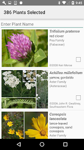 Maryland Wildflowers- screenshot thumbnail