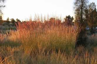 Photo: Year 2 Day 219 - Surrounding Bush in the Sunrise #2