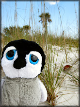Photo: Carlisle at the beach with some sea oats and palm trees.