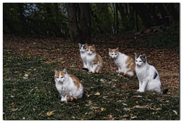 Le strane attese dei gatti.. di Paolo74s