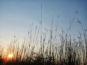 Photo: Sunset behind tall grass at Carriage Hill Metropark in Dayton, Ohio.