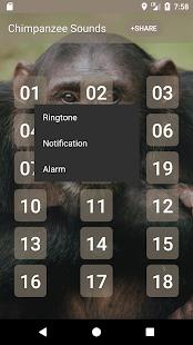Chimpanzee Sounds - náhled
