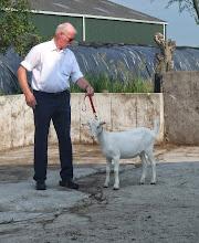 Photo: Rubriek 1: witte lammeren geboren in maart en april 2014.   1b. Joke 38.