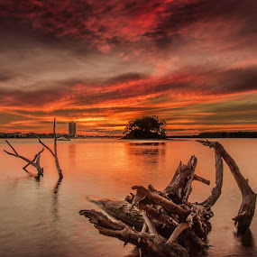 Old Timber by Michael Otero - Landscapes Sunsets & Sunrises ( contrast, singh ray, maine, wide angle, sunset, green, pink, pink and black, black )