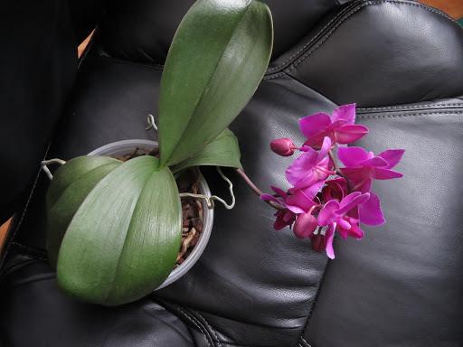 Les orchidées de Grigri 3qgay61e4oBqbkjgYlS6-om0CSDBJzPkLYeC8XxRUtbmLpW9Kj6NXDJk0zpZoA-Ke6FTYYKV1FLomupFF84f3-BDDYjWOtmoCW7lOyaOjaGMf2_i6Dqah8COI5_NGR3dWbF7rp4