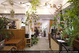 小青苑 Cyan Cafe