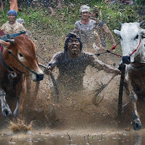 Stronger Jockey by Achmad Tibyani - Sports & Fitness Rodeo/Bull Riding ( indonesia, sport, pacu jawi, bull riding )