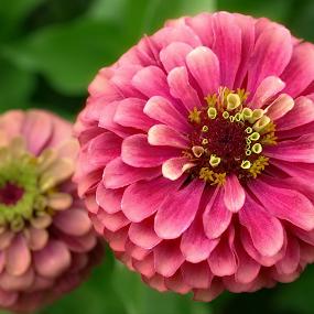 by Lori Rose - Flowers Flower Gardens (  )