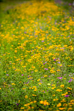 Photo: Wildflowers