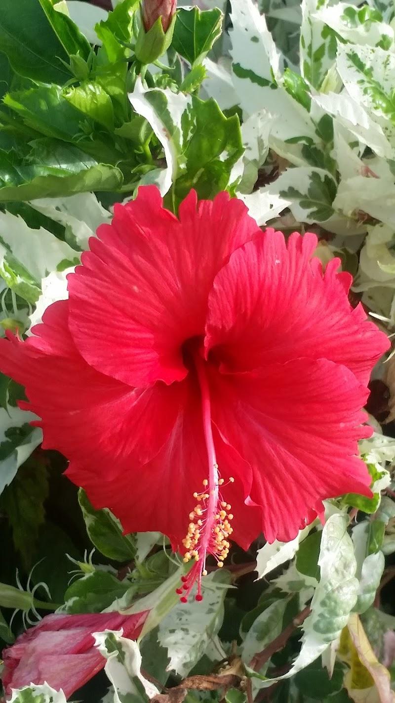 fiore rosso su verde di Marinazu