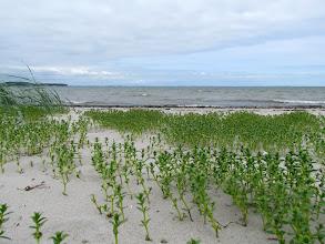Photo: Auf der Priwall-Halbinsel