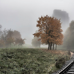 Autumn Mist by Dmitriev Dmitry - Landscapes Weather ( foggy, tree, grass, autumn, fog, belarus, autumn colors, misty, mist,  )