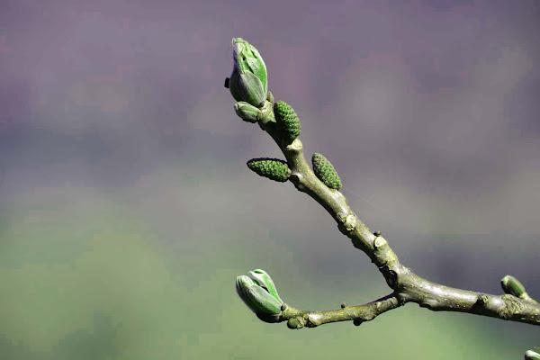 arrivo di primavera di aeglos
