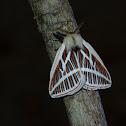Eubergia caisa