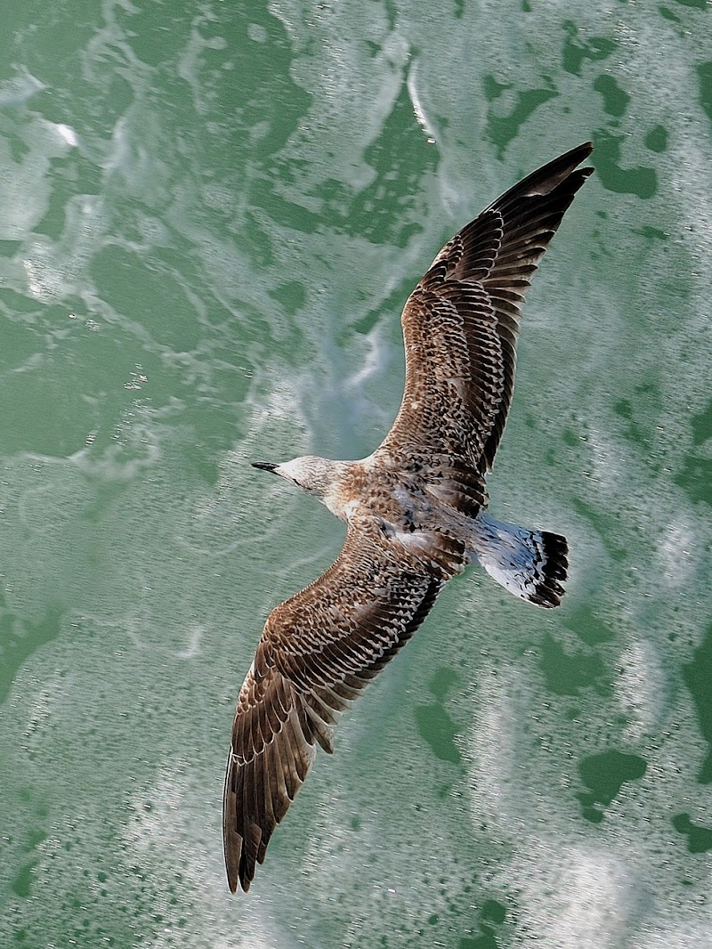 Volare!!! di leonardo valeriano