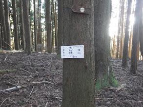 大篠山(904mピーク)