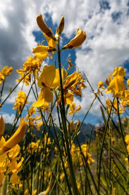 Yellow as the sun di mario_ph78