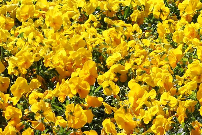 Non tutto il giallo è cattivo di scerda
