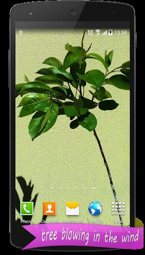 Real Tree Live Wallpaper