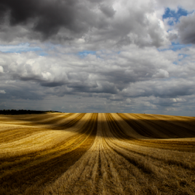 Yellow Field  by Stephanie Veronique - Landscapes Prairies, Meadows & Fields ( field, wheat, nature, cloudy, sunshine, gold, yellow, landscape, shade, light,  )