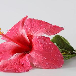 123rf flower 3.jpg