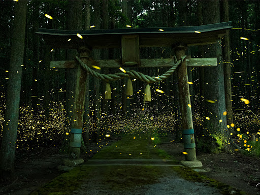 Photographer Captures Breathtaking Shots of Shrine in a Swirling Sea of Fireflies