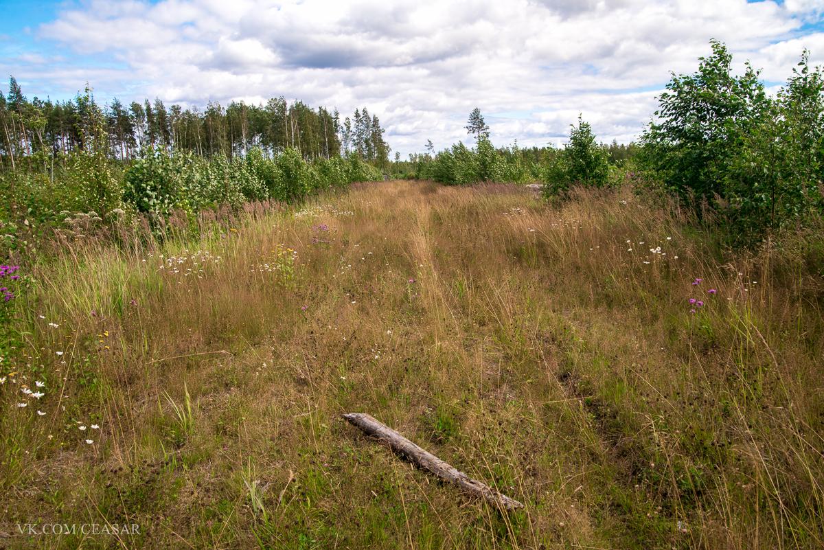 Бурелом закончился и началась дорожка в поле