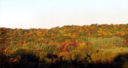 Photo: Fall Woods 2011 Morning