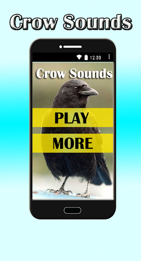 Crow Sounds