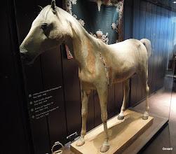 Photo: Invalidovna muzeum: Napoleonův arabský oř, trošku pohublej a natrženej