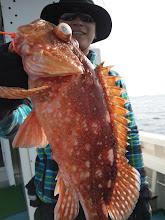 Photo: アラカブだけは、よく釣れる!