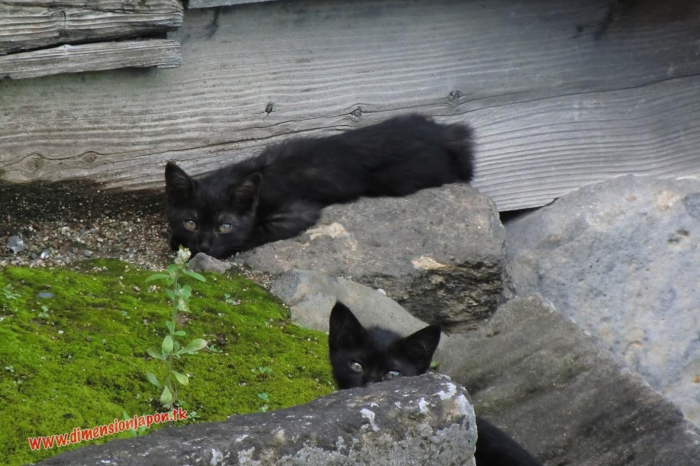 CIMG1472 Gaticos por el castillo de Kumamoto (Kumamoto) 15-07-2010