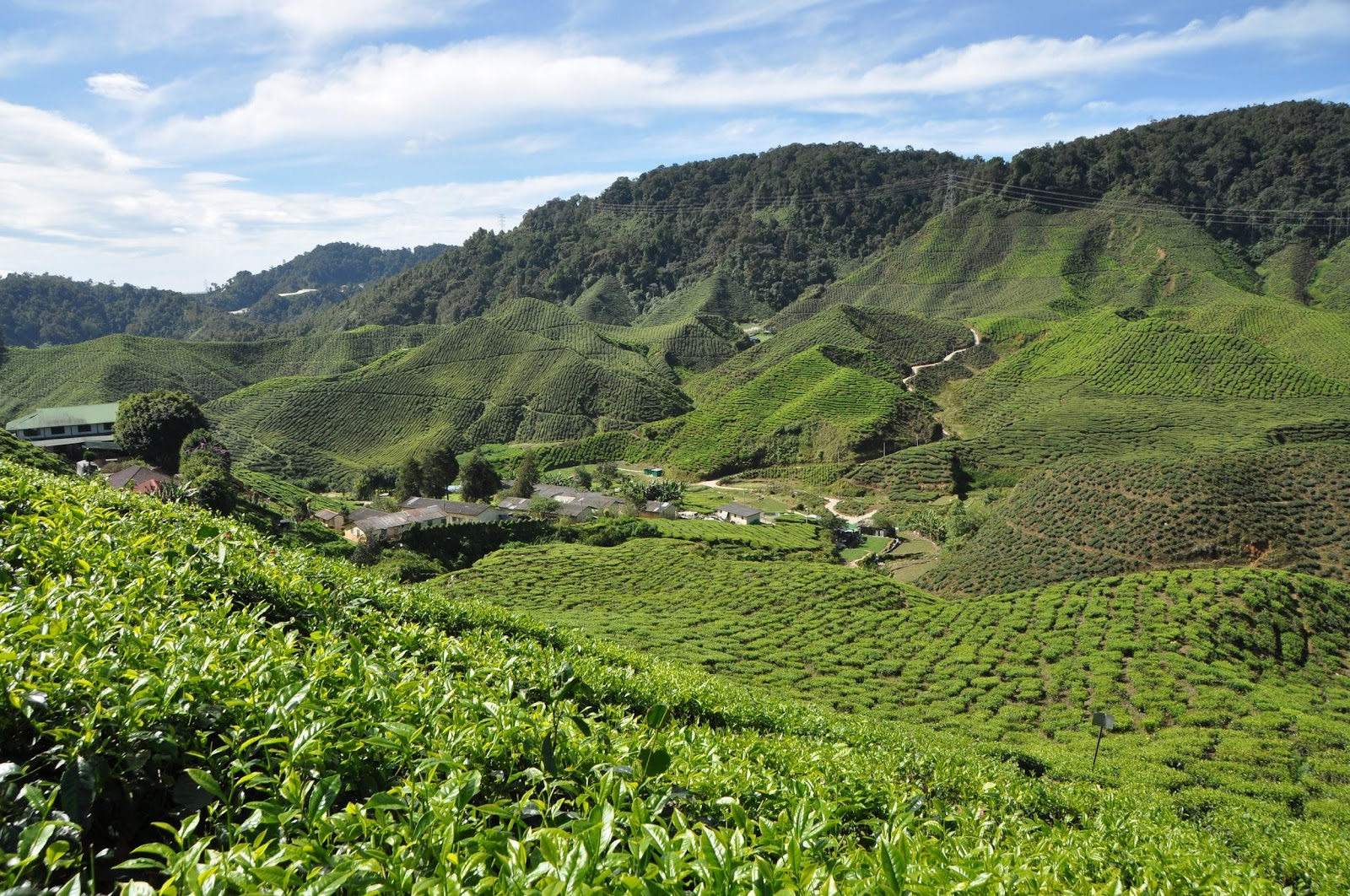 cameron-highlands-colorful-tea-plantation-malaysia