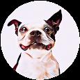 ABOUT DOGS - О СОБАКАХ LITE icon