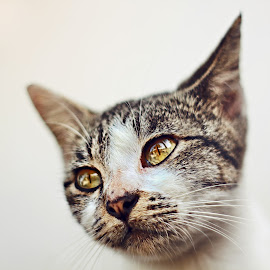 Portrait Of A Cat by Lay Sulaiman - Animals - Cats Portraits ( cats, cat, portraits, animals, portrait )