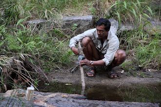 Photo: Sanjayan setting up a camera trap at the river.