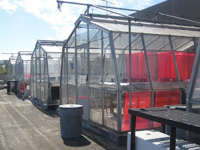 Photo: Up to the roof to see the Research Greenhouses!