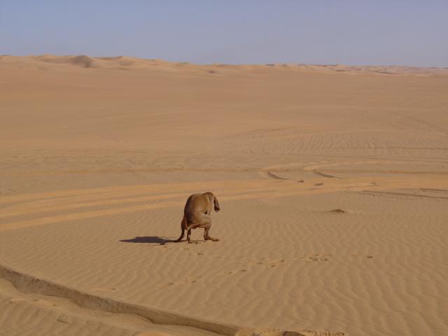 kea ispirata nel deserto di enfa