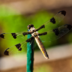 by Muzo Gul - Novices Only Wildlife