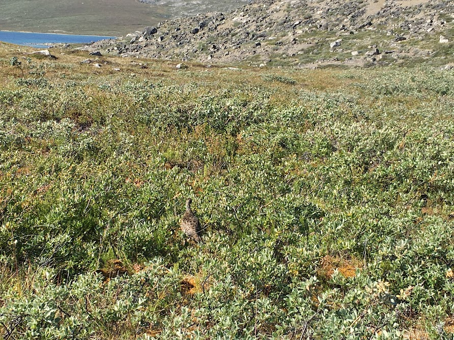 Гренландия с 02 по 15 августа 2017. Поход по The Arctic Circle Trail.