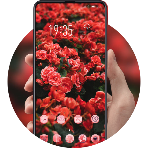 Flower stunning dark red rose field theme