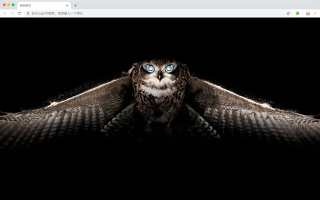 Owl New Tab Page HD Animals Themes